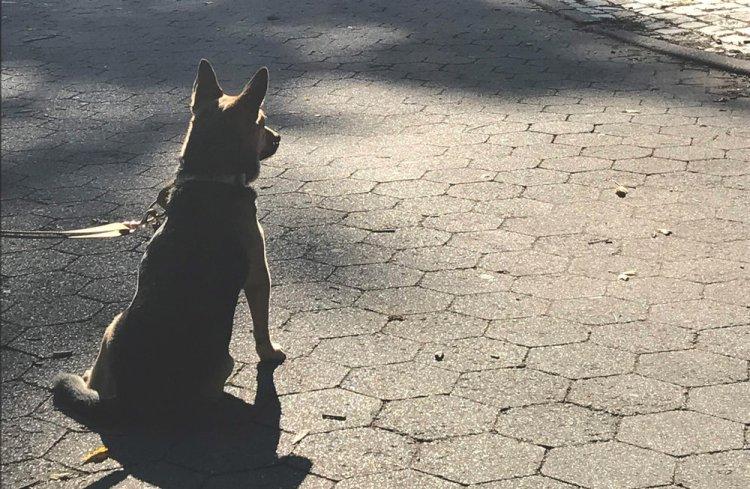 Montreal State - Dog Watching