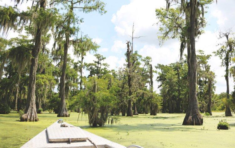 Lafayette - Swamp Tour